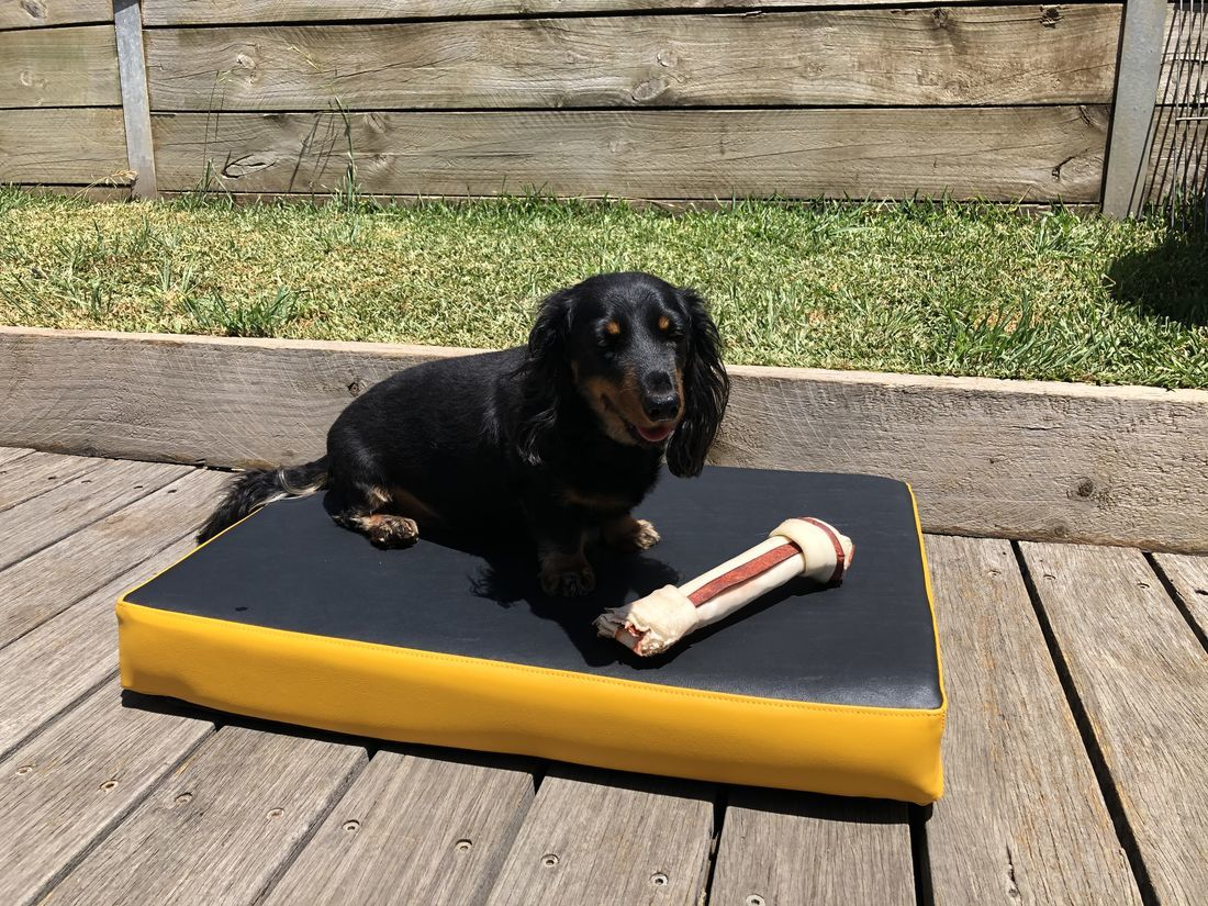 black and yellow dog bed image